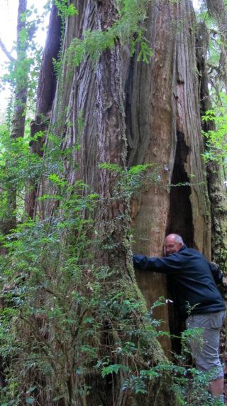 Tofino – Ucluelet: Over regenwoud, bier en moeder beer met haar kleintje