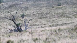 Sterren kijken op Mauna Kea