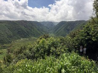 Dolfijnen, Mangoesten en ezels: een trip door het noorden van Hawaii